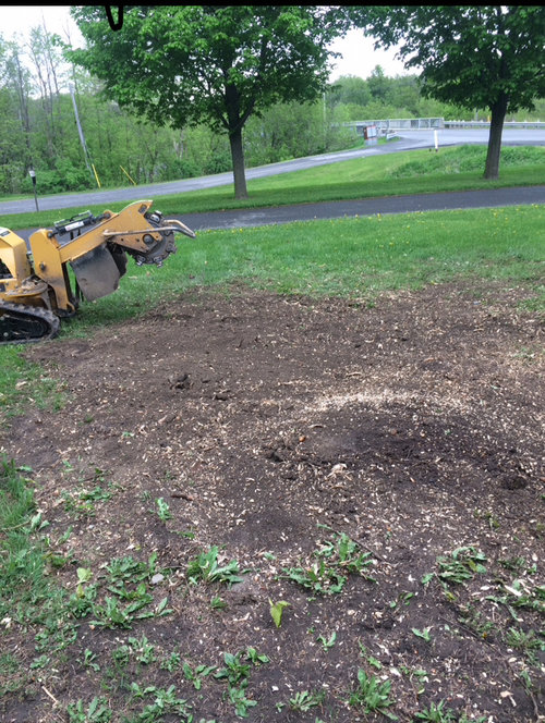 Stump Grinding – Green Thumb Property Services