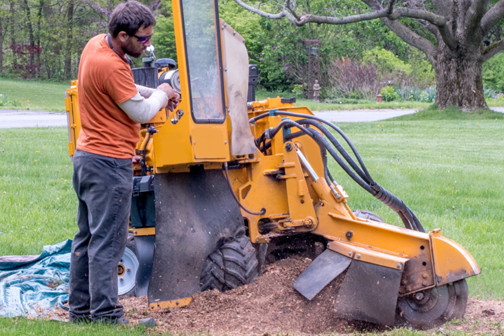 Everything You Need to Know About Stump Grinding