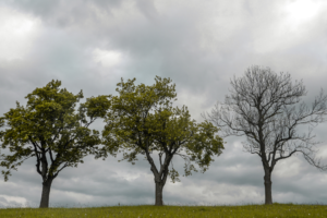 three trees on a stormy day, one sick with no leaves